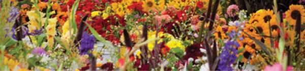 Lake Oswego Farmers' Market flowers